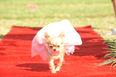 Newly UNLEASHED! Beverly Hills Chihuahua 3 Viva La Fiesta Movie Clips and activity pages!!